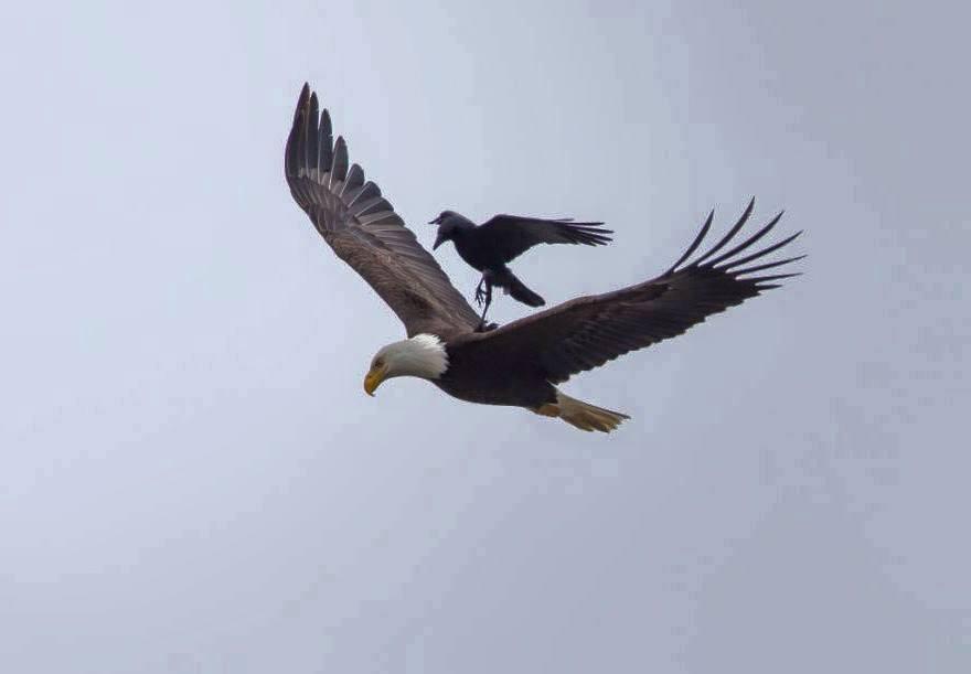 amazing_birds_fly