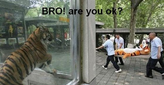 bro_are_you_ok