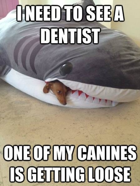 i_need_to_see_a_dentist