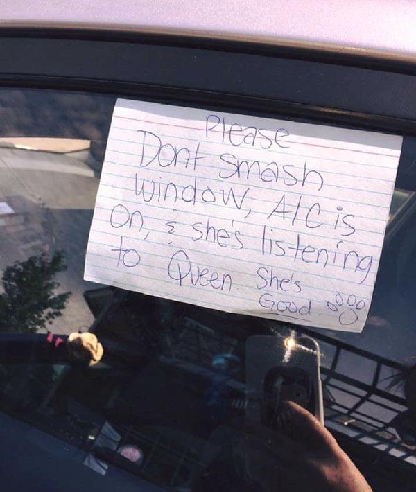 please_do_not_smash_window