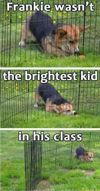 the_brightest_kid_in_his_class