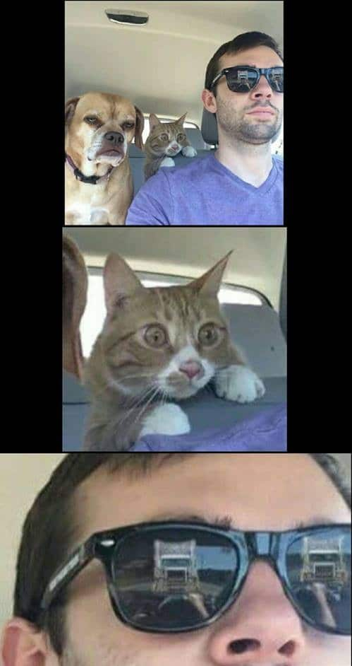 when_you_drive_with_animals